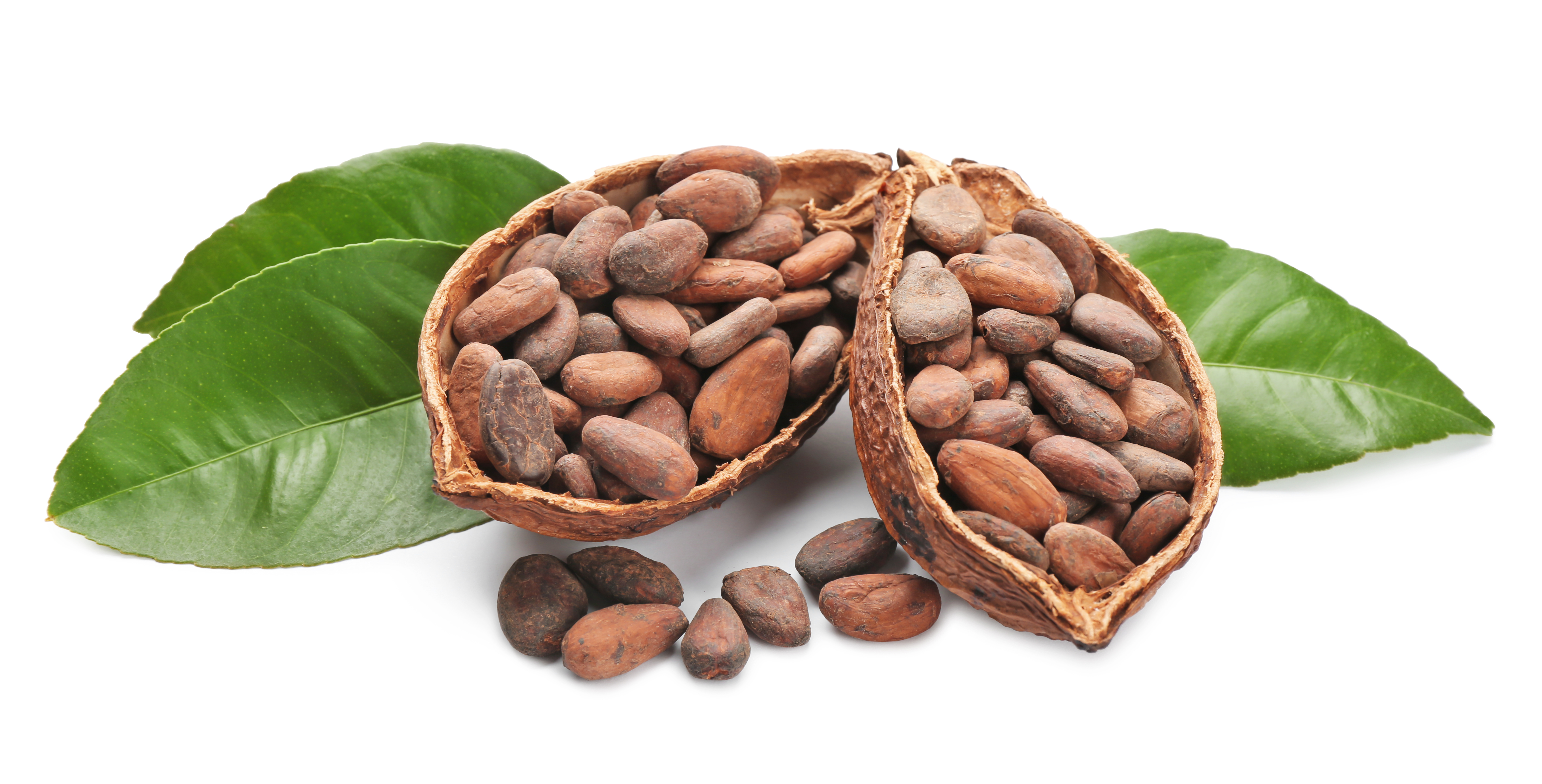 Halves of ripe cocoa pod with beans on white background